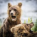 Grizzly Cubs Looking For Their Mum by Lyl Dil Creations