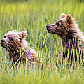 Grizzly Cubs by Lyl Dil Creations