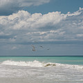 Group Of Pelicans Above The Ocean by Zina Stromberg