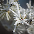 Growing Hoarfrost by Mark Duehmig