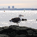 Gull Isle II by Darren Dwayne Frazier