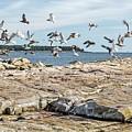 Gulls by Karin Pinkham