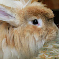 Hairy Rabbit by Debbie Stahre