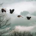 Half Second Of Flight by Bob Orsillo