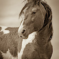 Handsome Portrait by Mary Hone