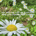 Happy Daisy Quote by JAMART Photography