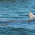 Harbor Seals And Seaweed by Robert Potts
