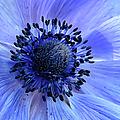 Harmony Blue by Mim Eisenberg