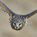 Harrier Eye-to-eye by William Jobes