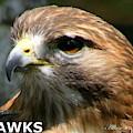 Hawks Mascot 2 by Larry Allan