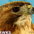 Hawks Mascot 3 by Larry Allan
