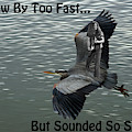 He Flew By Too Fast...but Sounded So Sweet by Ben Upham