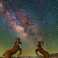 Head To Head With The Galaxy by Ralf Rohner