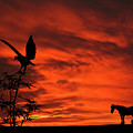 Heading Home Horse Eagle Sunset Silhouette Series   by David Dehner