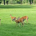 Herd Of Deer by Terri Morris