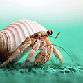 Hermit Crab Running by With Love Of Photography