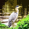 Heron by Nigel Dudson