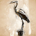Heron On Post by Max Huber