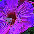 Hibiscus by Dennis Baswell