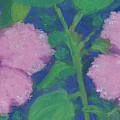 Hibiscus Enchantment by Anne Katzeff