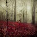 Hidden Place by Dirk Wuestenhagen