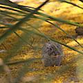 Hidden Rabbit Among Golden Palo Brea Flowers by Colleen Cornelius
