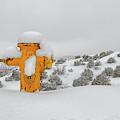 High Desert Hydrant by Britt Runyon