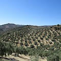 Hills Near Iznajar by Chani Demuijlder