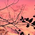 Holly Tree Sunset 2 Landscape by Itsonlythemoon