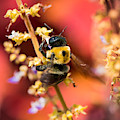 Honey Bee Serenade by Karen Wiles