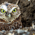 Hoo Are You? by Jack Peterson