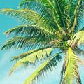 Hookipa Palm Dreams by Sharon Mau