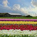 Hope Is - Flower Art by Jordan Blackstone