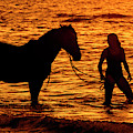 Horse And Rider At Sunset by Arterra Picture Library