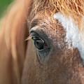 Horse Eye by Dale Powell