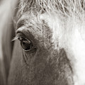 Horse Eye - Sepia by Dale Powell