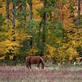 Horse In Fall by Hella Buchheim