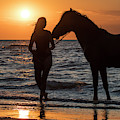 Horse On The Beach by Arterra Picture Library