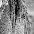 Horse Portrait 2 by Andrea Anderegg