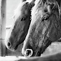 Horse Portrait 3 by Andrea Anderegg
