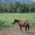 Horse Print 900 by Paulette Thomas