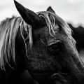 Horse Up-close by Taylor Richesin