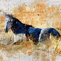 Horse Watercolor by Mark Jackson