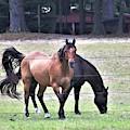 Horses At Trussom Pond by Kim Bemis