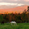 Horses Grazing During The New England by Myloupe/uig