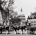 Horses In Prohibition  - Washington D.c. - Budweiser Clydesdale  by Doc Braham