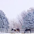 Horses In The Snow by Susan Rydberg