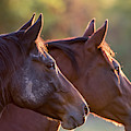 Horses by Torbjorn Swenelius