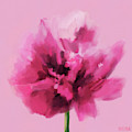 Hot Pink Carnation by Beverly Brown