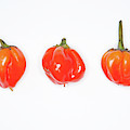 Hot Red Chillies by Helen Northcott